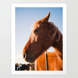 Horse. Palo Duro Canyon, Texas. Art Print