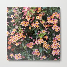 Tangerine Beauty Cross Vine Flowers Metal Print