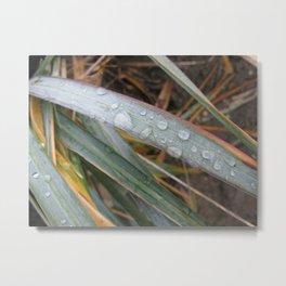 Seagrass 74 Metal Print