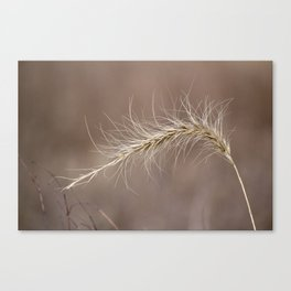 Wisp in the Wind Canvas Print