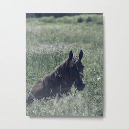 Caribbean Horse Metal Print