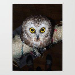 Owl Get Your Ass Poster