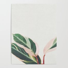 Pink Leaves III Poster