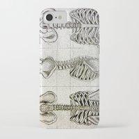 bones iPhone & iPod Cases featuring Bones by Kristen Willsher
