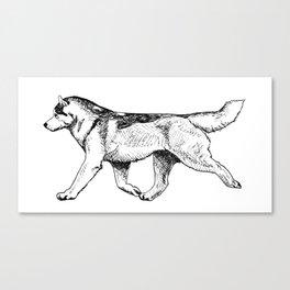 Male Siberian Husky Canvas Print