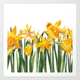 watercolor yellow narcissus Art Print