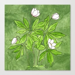 Wild Wood Anemone Canvas Print