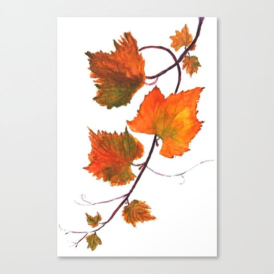 grapevine in autumn Canvas Print