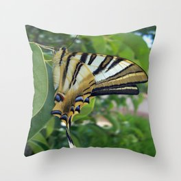 Swallowtail With Partially Closed Wings Side View Throw Pillow