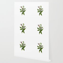 Peruvian Lily Wallpaper