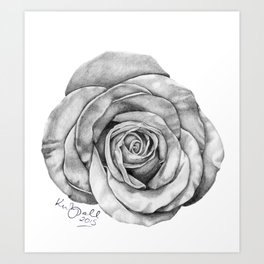 Rose Drawing Art Print