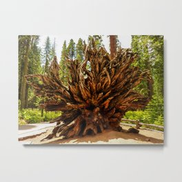 Roots of Dead Giant Sequoia Tree, Yosemite National Park Metal Print