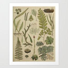 Ferns And Mosses Art Print