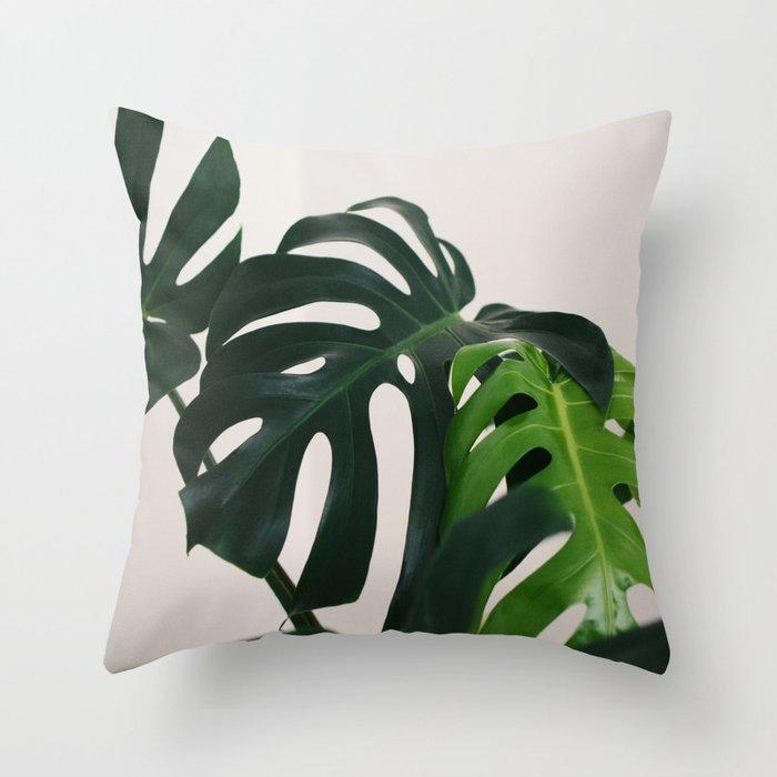 Minimalist Mid Century Scandinavian Style House Plant Mostera Green