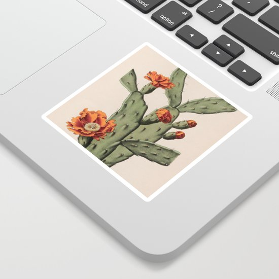 Botanical Cactus by bluespecsstudio
