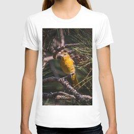 Morning Oriole T-shirt