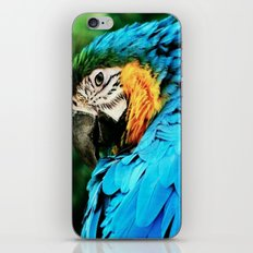I've Got My Eye On You iPhone & iPod Skin