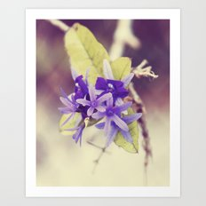 Cloaked in Purple Art Print