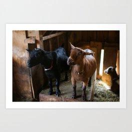 Goat Friends Art Print