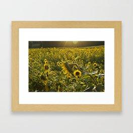 Sun Kissed Sunflower Framed Art Print