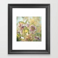 Hellebore Framed Art Print