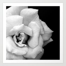 Rose Monochrome Art Print