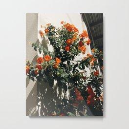 Flowers in Boquete, Panama Metal Print