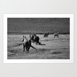 Wild 03 Art Print