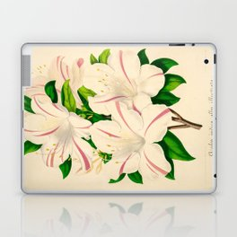 Azalea Alba Magnifica (Rhododendron indica) Vintage Botanical Floral Scientific Illustration Laptop & iPad Skin