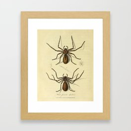 """""""White-Jointed Spider"""" by Sarah Stone, 1790 Framed Art Print"""