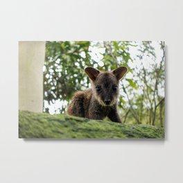 Baby Wallaby Metal Print