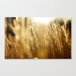 Morning Fields Canvas Print
