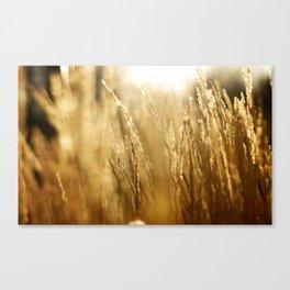 Morning Fields Canvas Print