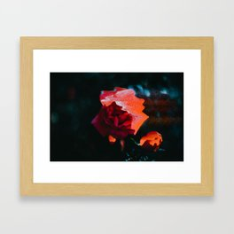 Glitch Art Rose Framed Art Print