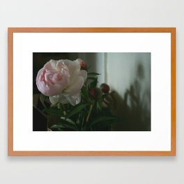 Peonies in Shadow Framed Art Print