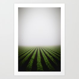 Foggy field Art Print