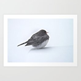 Brave Bird in a Blizzard Art Print