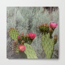 Cacti in Bloom - 3 Metal Print