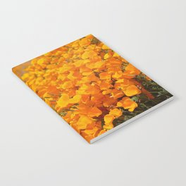 Golden Meadow of California Poppies in Bloom by Reay of Light Photography Notebook