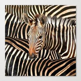 Portrait Of A Zebra - Modern Wildlife Photography Art Canvas Print