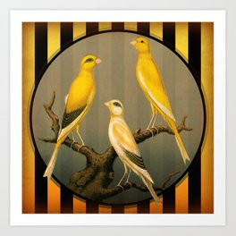 Vintage Canaries Art Print
