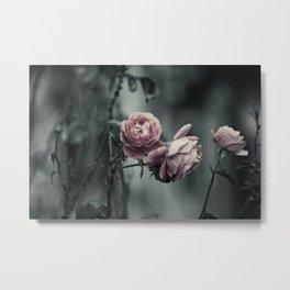 Wild Rose - VILD ROS II Metal Print