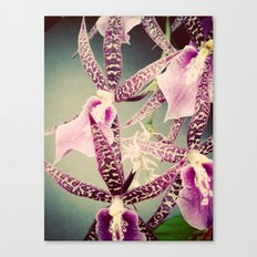 Orchid Love 2 Canvas Print