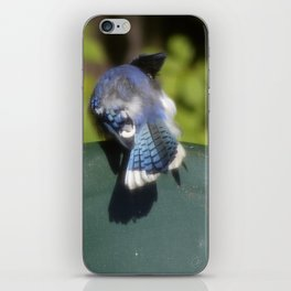 Blue Jay Feathers Blowin' in the Wind iPhone Skin