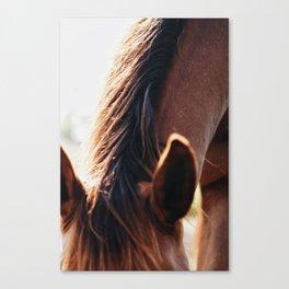 perked ears Canvas Print