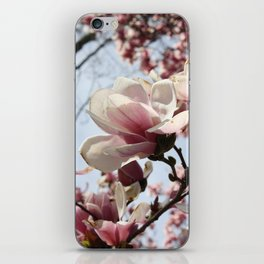 Tulip Tree iPhone Skin