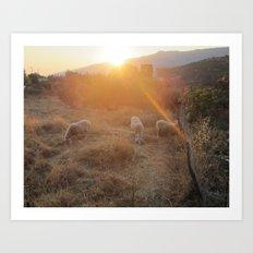 Sheep in the sun Art Print