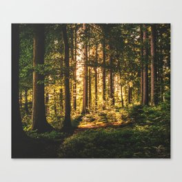 Woods  - Forest, green trees outdoors photography Canvas Print