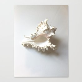 Conch Still Life Canvas Print