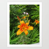Day Lily Flowers and Thistle Art Print